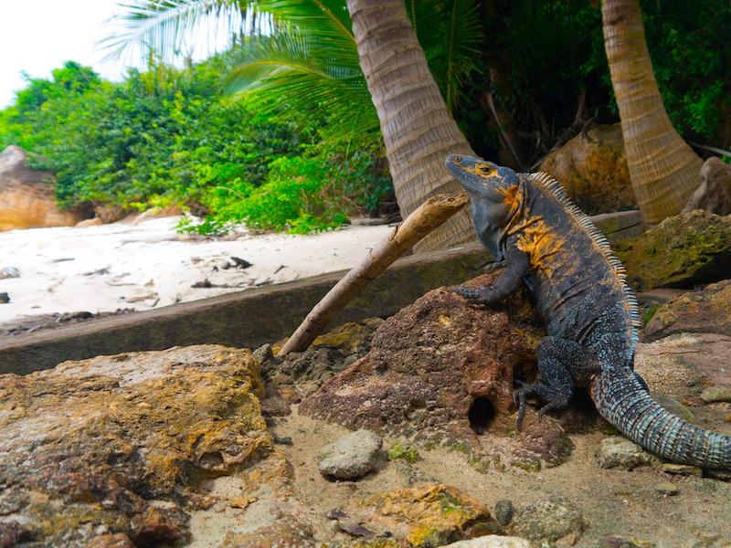 Panama Nationalparks Tierschutz