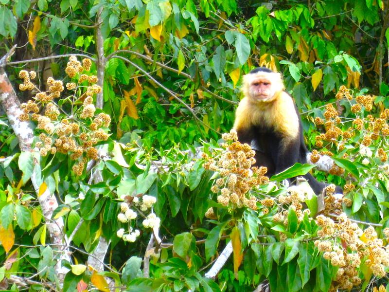 Panama Mietwagen Natur erleben
