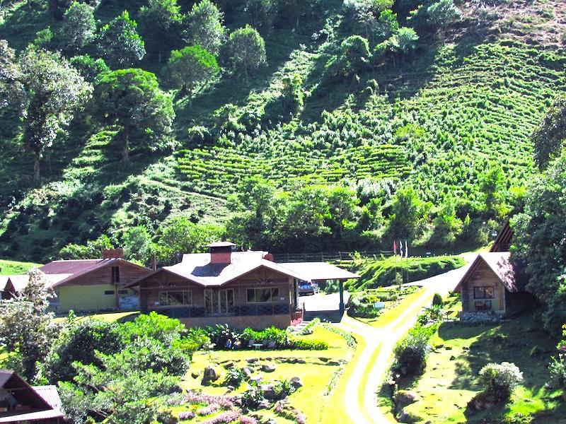 Hotels Chiriqui Panama Boquete Tree Trek Mountain Resort