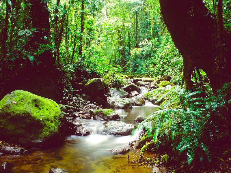 Panama Mietwagenreise Individuell Tropenwald