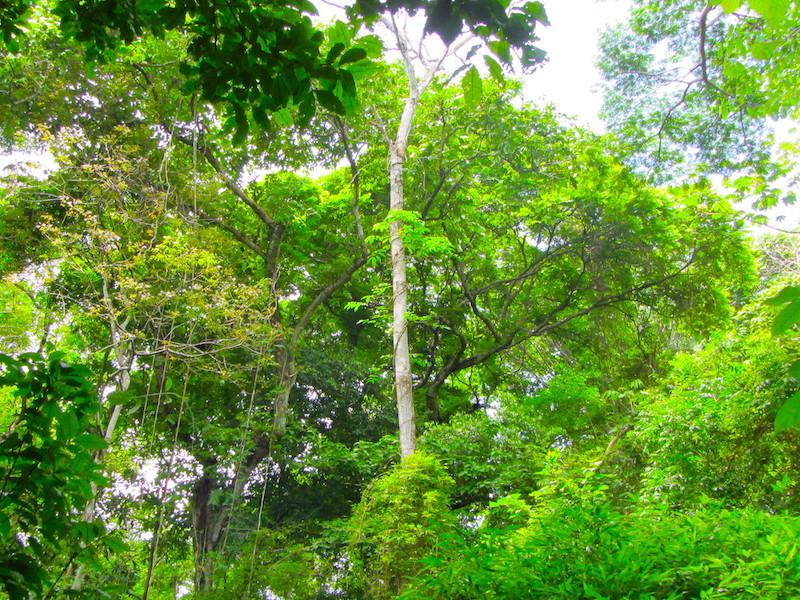 Mietwagenreise das grüne Panama