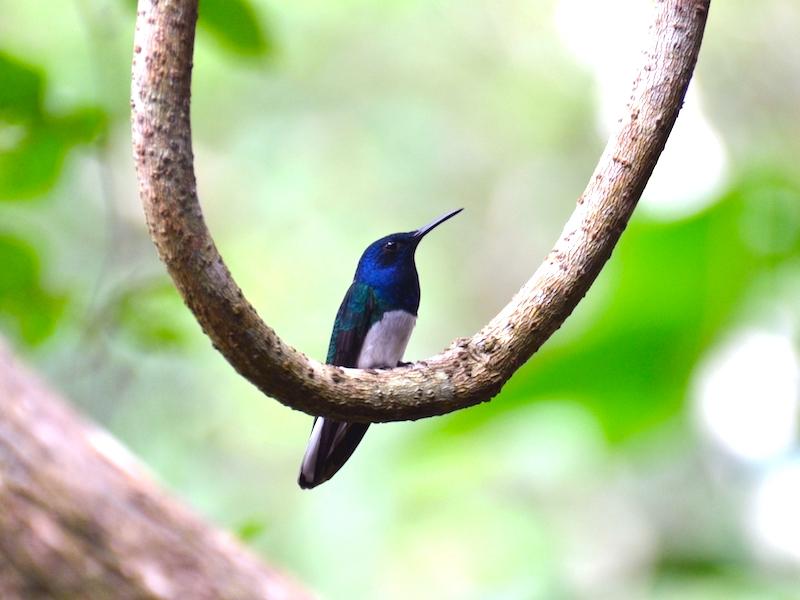 Nationalpark Altos de Campana Panama